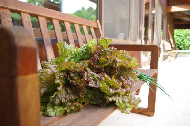 130626_収穫野菜