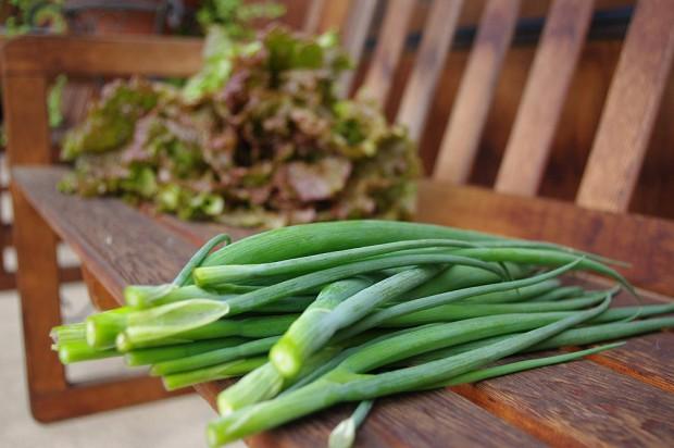 130623_収穫野菜-(5)