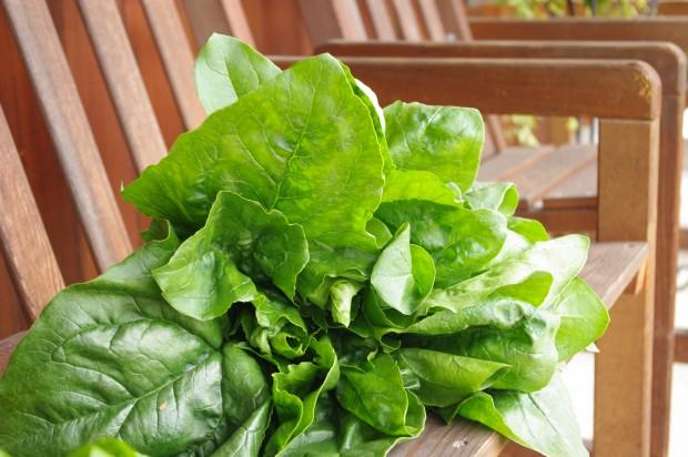 130624_収穫野菜