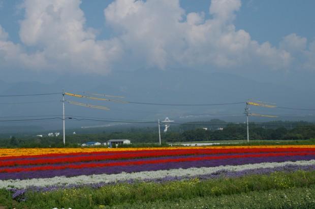 130816花野辺 (2)