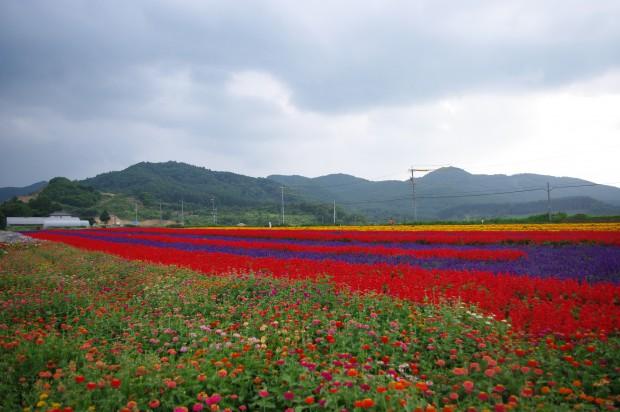 130821_花畑 (2)