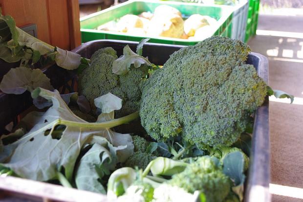 131118_収穫野菜ブロッコリー