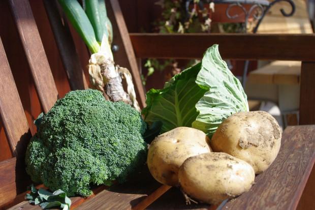 131118_収穫野菜