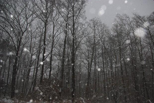 140208_大雪
