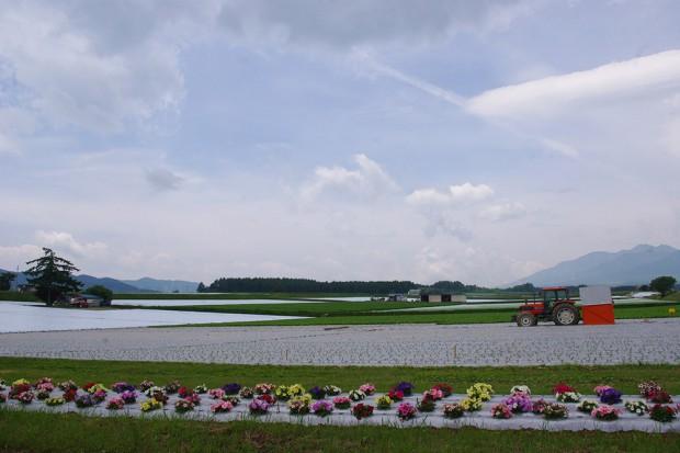 140620_川上村_野菜畑-(2)