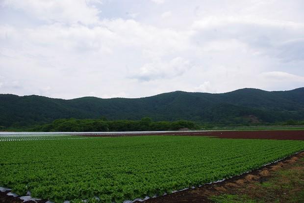 140620_野辺山_レタス畑-(1)