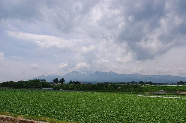 140620_野辺山_野菜畑
