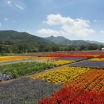 分譲地の花畑